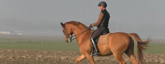 willem training